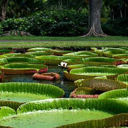 Seychelles National Botanical Gardens, Victoria