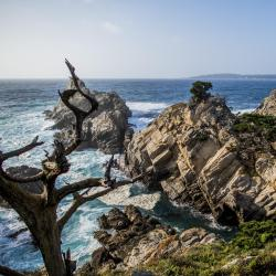 Reserva Estatal Point Lobos