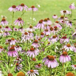 Hoşgörü Bahçesi - Tuin der Tolerantie