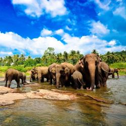 Pinnawala Elephant Orphanage, Pinnawala