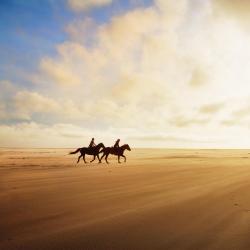 Al Sahra Desert Resort Equestrian Centre