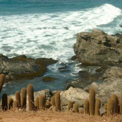 Punta de Lobos, Pichilemu