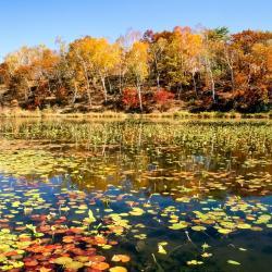 Hasuike Pond