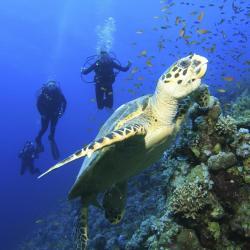 Coral Island Charters