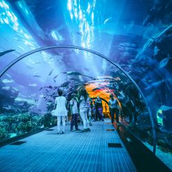 Dubai Akvaryumu ve Sualtı Hayvanat Bahçesi