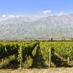 Wine Route Mendoza