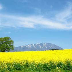 Iwate