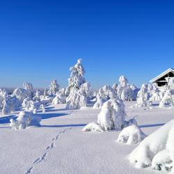 Saariselka Ski 4 svečių namai