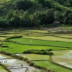Nusa Tenggara Oriental