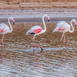 Ria Formosa naturreservat