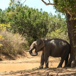 Yala National Park 5 хостелів