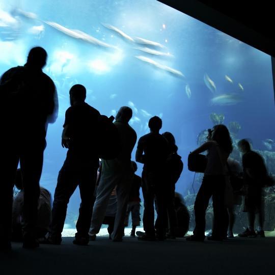 North Sea Oceanarium