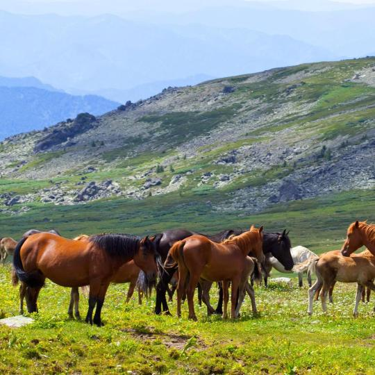 Horse-riding in the hills