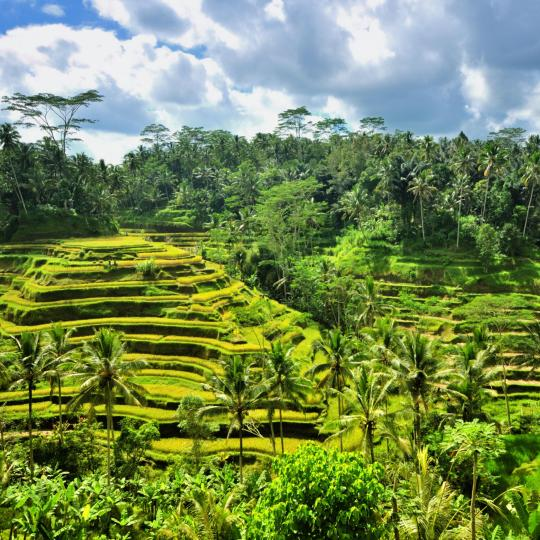 The scenic rice terraces