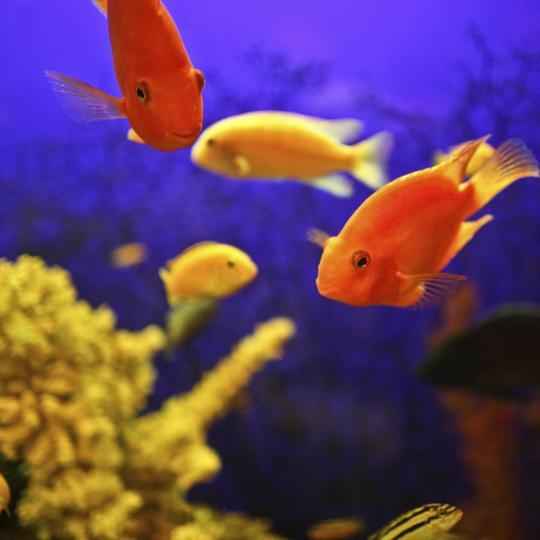 Océanopolis, Brest Aquarium