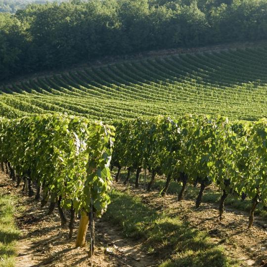 De wijngaarden van cahors