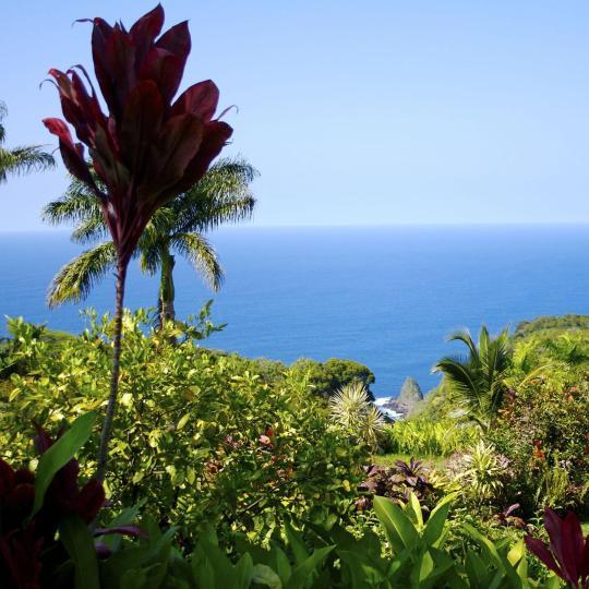 Visit a botanical garden