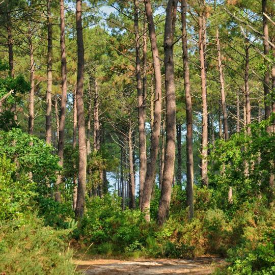 Landes de Gascogne Regional Nature Park