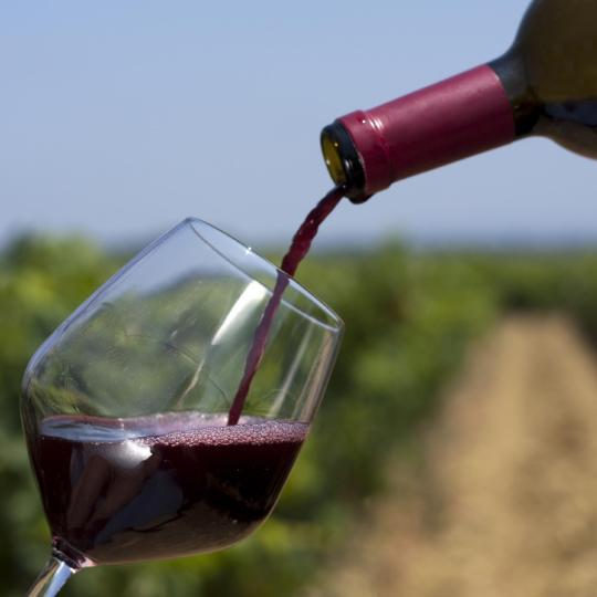 Discover the Côtes du Rhône wines