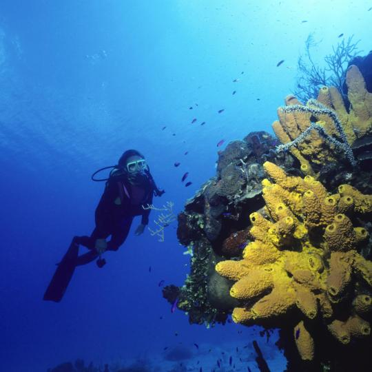 Meeresschutzgebiet Islas Columbretes
