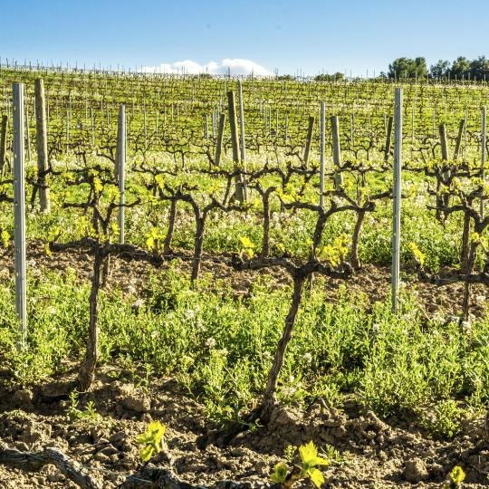 Wein- und Olivenöl in der Region Priorat