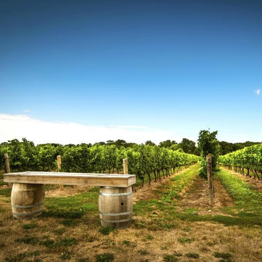 Wine Country: un assaggio vinicolo del Niagara