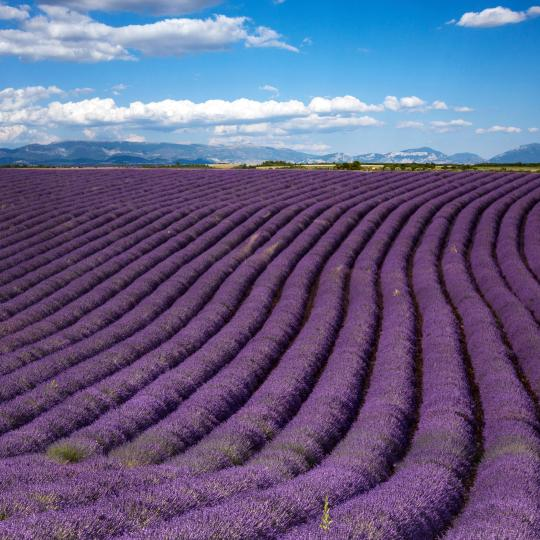 The Valensole Plateau