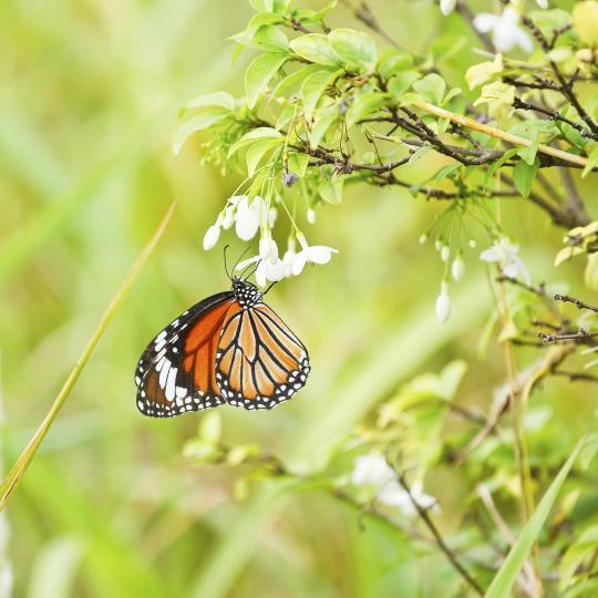 Die Schmetterlingsfarm Trassenheide besuchen