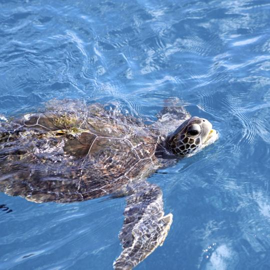Наблюдение за черепахами