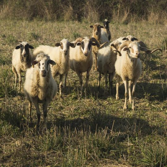 Gažul shepherd's village