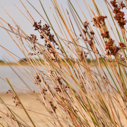 The golden sands of Colostrai Beach