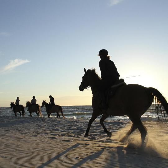 Horse riding in Cape Ferrato