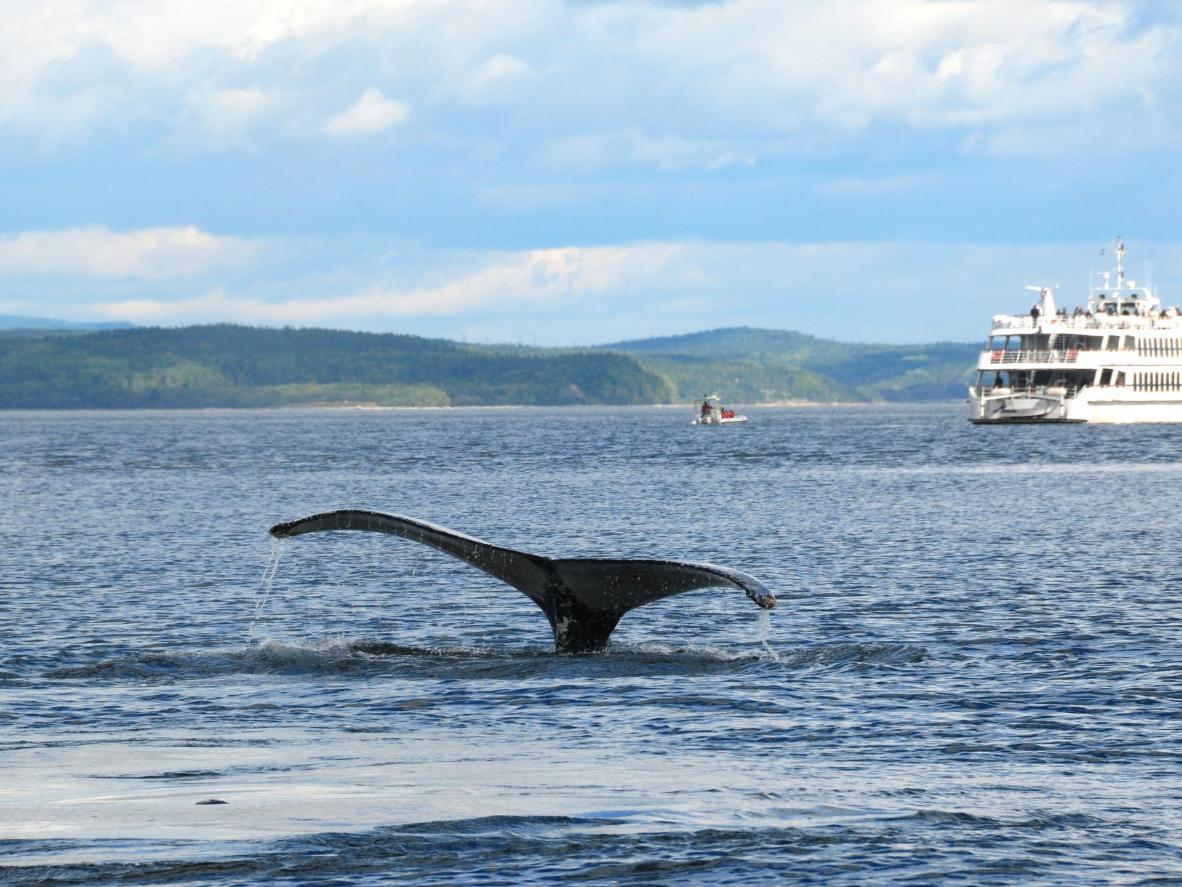 Get up close and personal with these gentle giants while whale watching