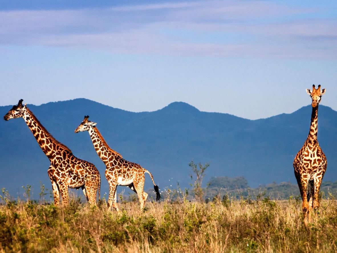 Live alongside your favourite wildlife at an eco safari