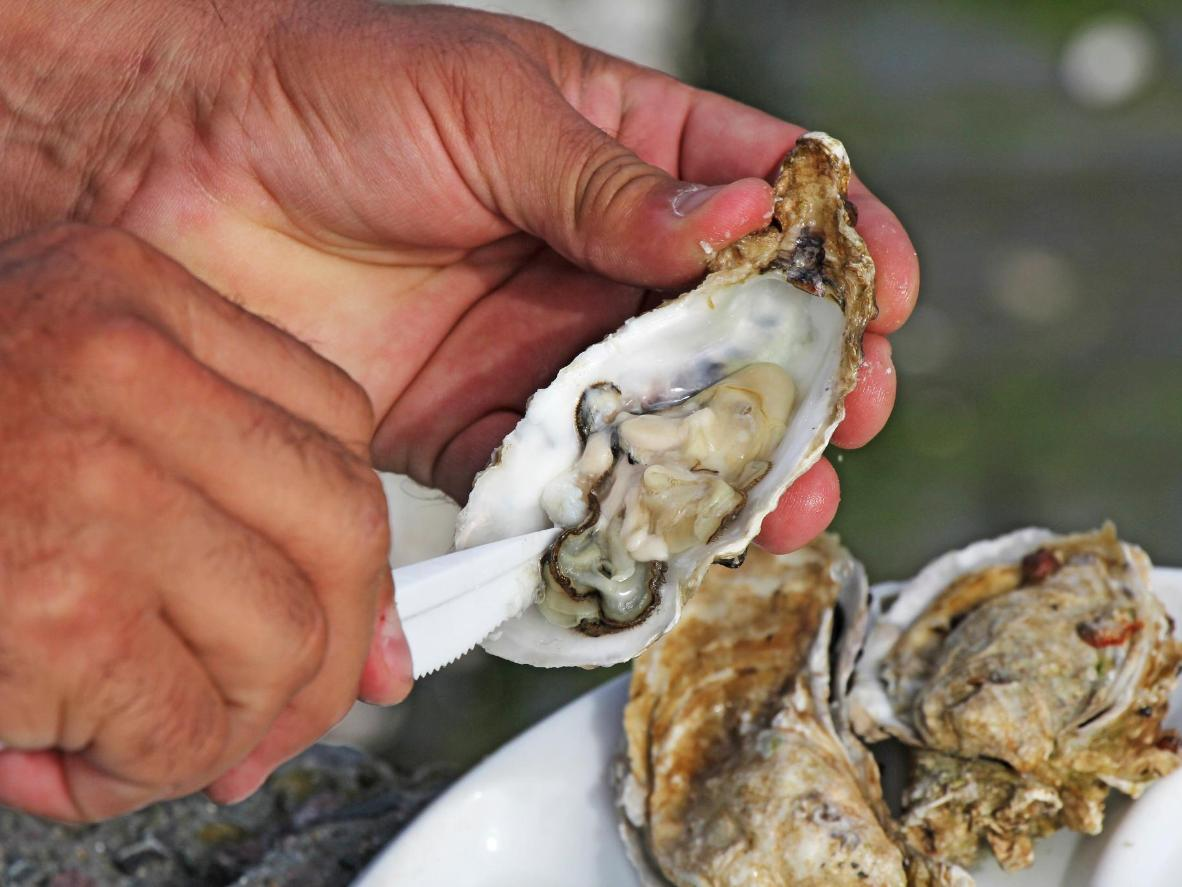 Fresh shellfish morsels deliver a true taste of the ocean