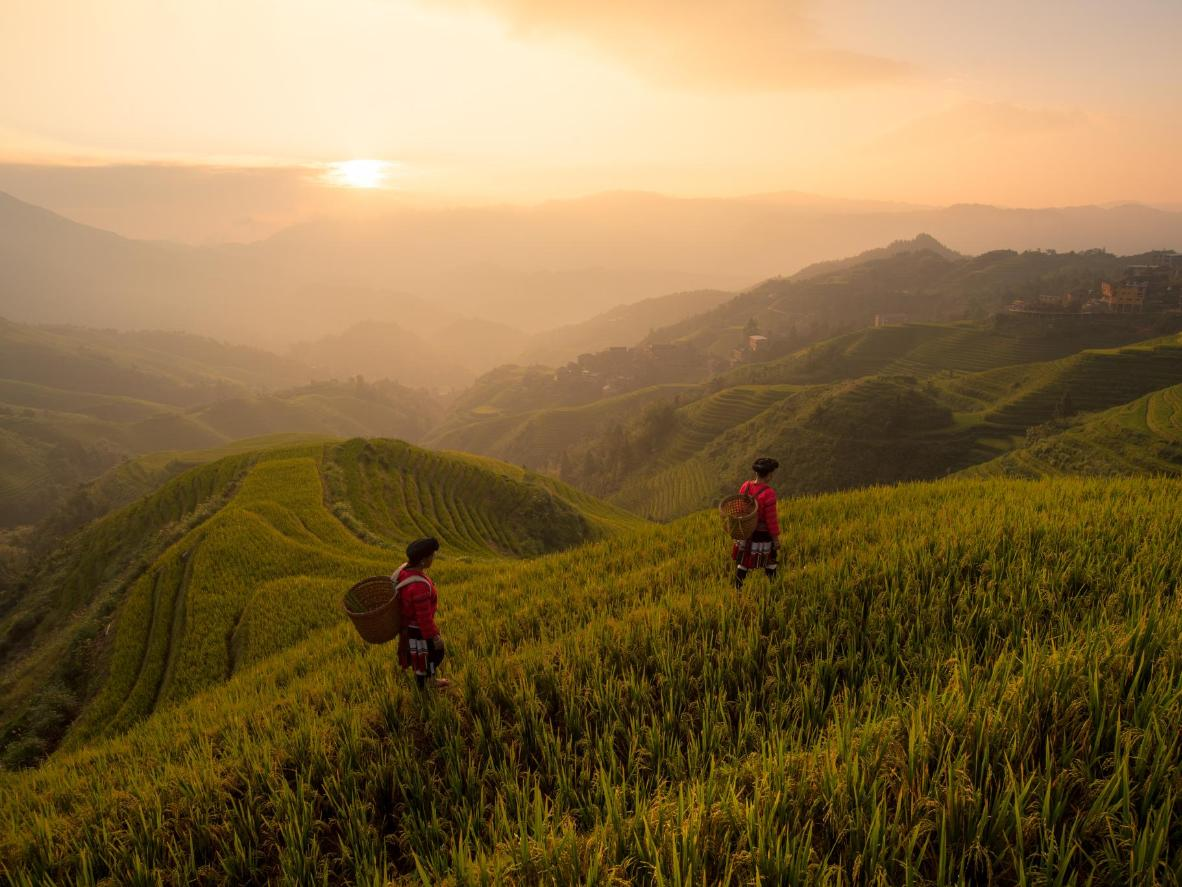 Admire the rolling rice terraces in Longsheng