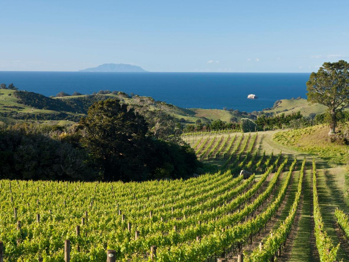 Vineyards on Waiheke Island