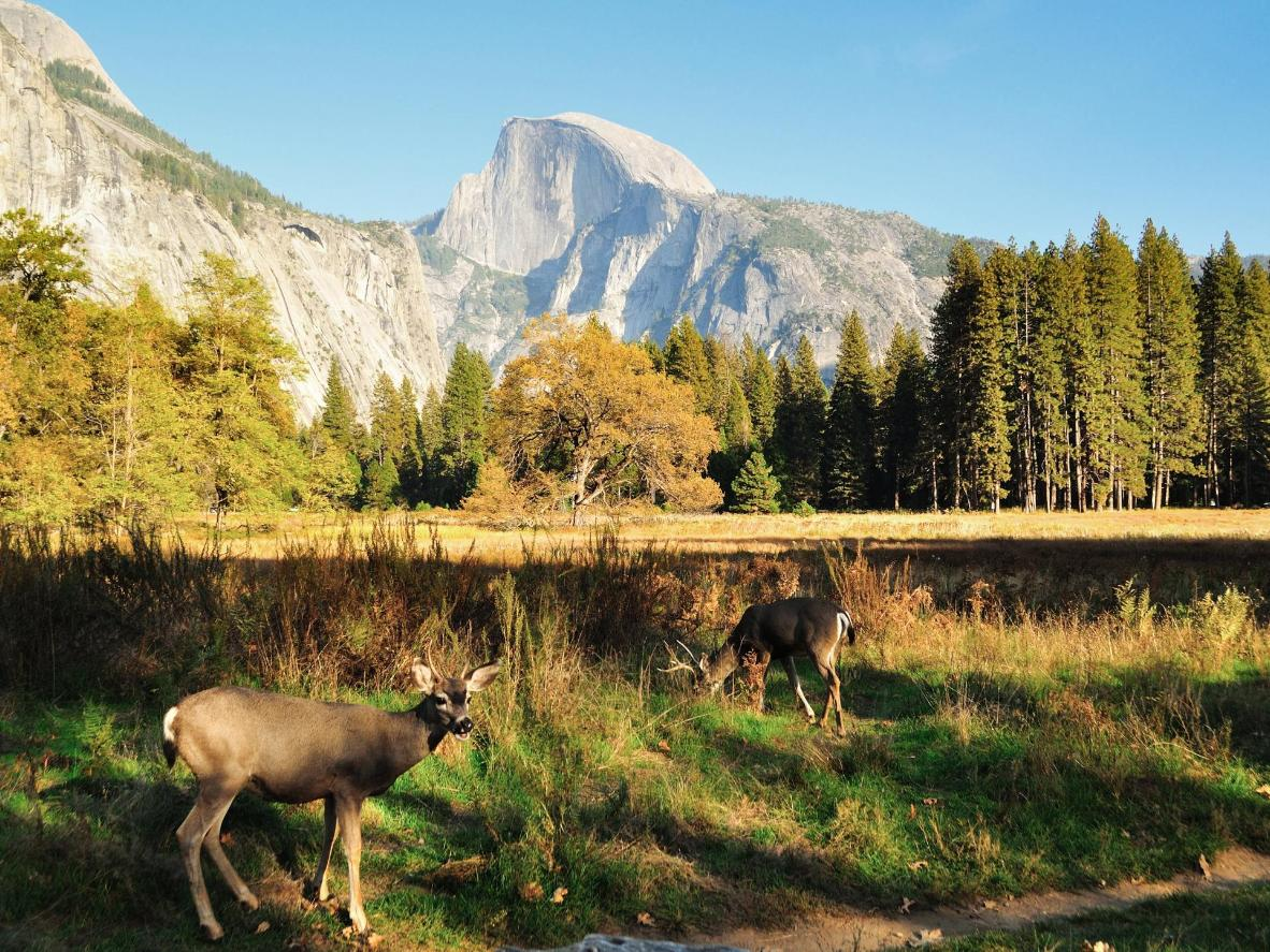 Flora and fauna in Yosemite National Park, USA