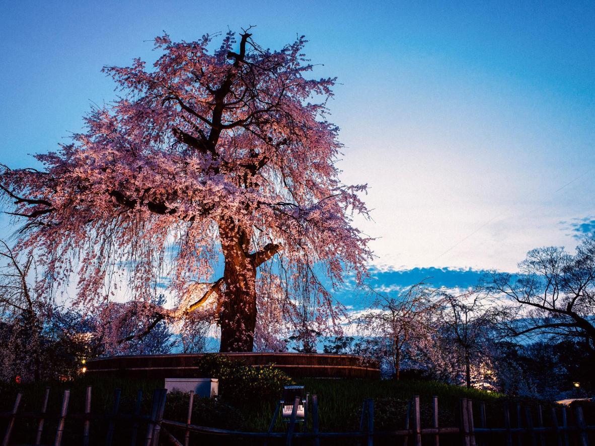 Park Kyoto - a piece of Japan in the Ukrainian capital