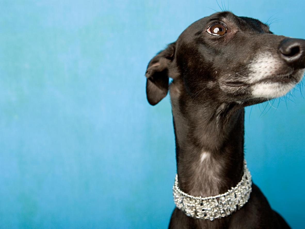 Leeds Castle is home to the largest public display of dog collars in the world