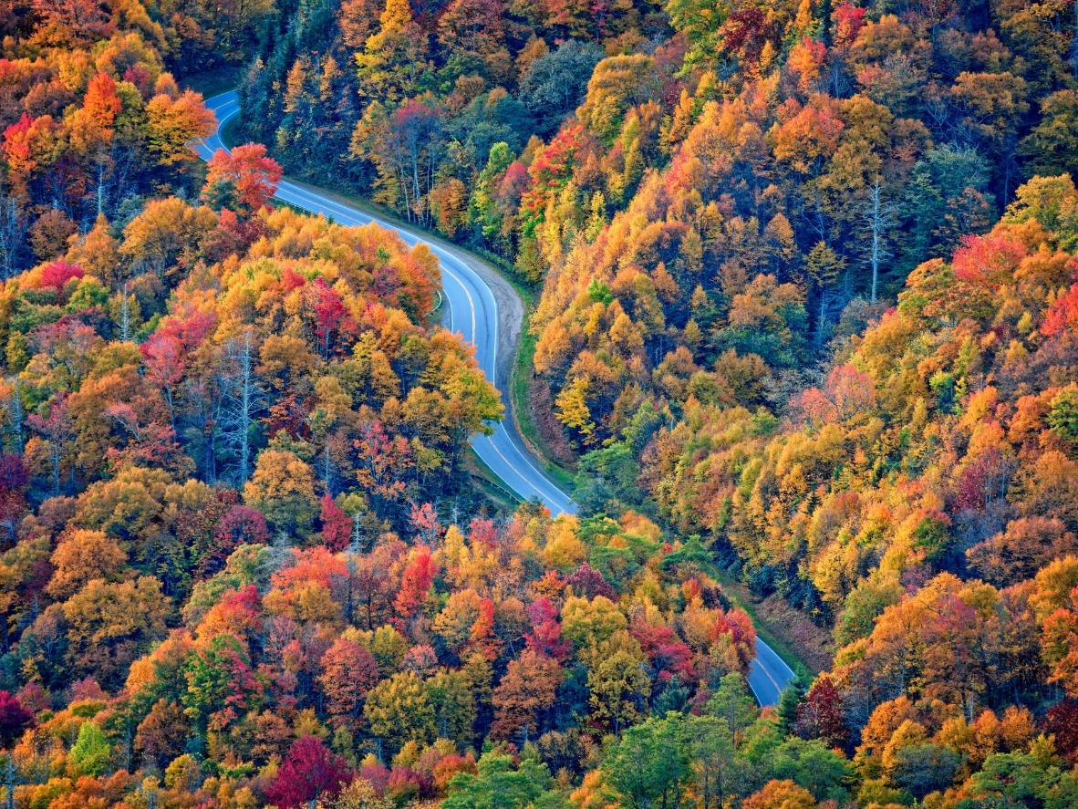 Autumnal forests line Newfound Gap Road in Great Smoky Mountains National Park