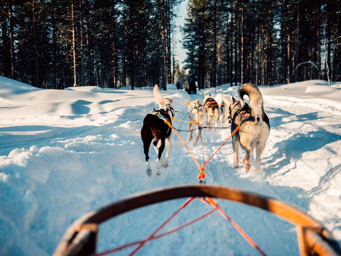 There's no better way to see Rovaniemi's woodland than from a husky-drawn sleigh