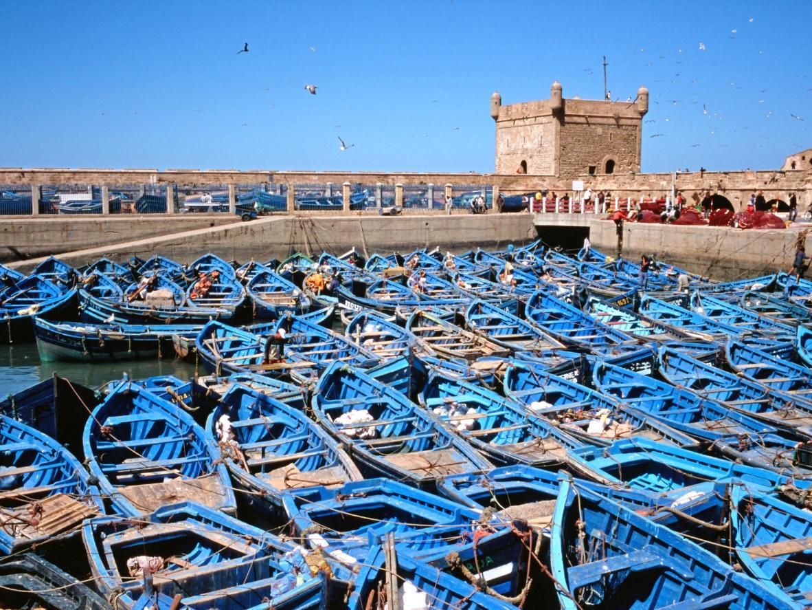 Un mar de audaces barcos de pesca azules en el puerto de Essaouira.