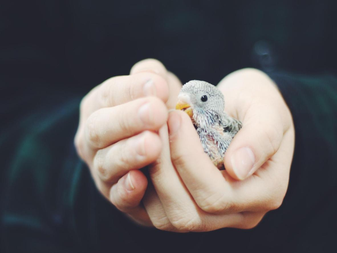 Assist in all stages of rescued birds care in San Francisco