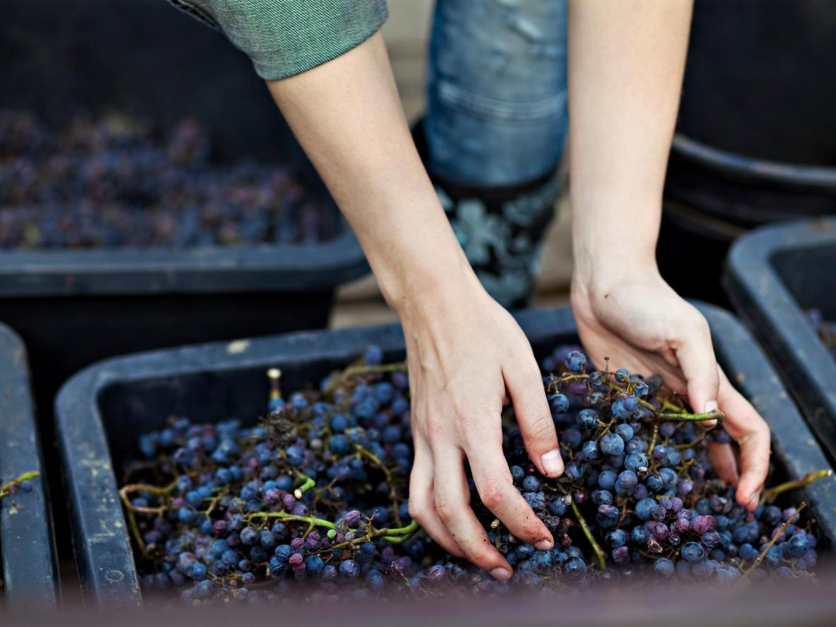 Croatia has a wide variety of indigenous grapes
