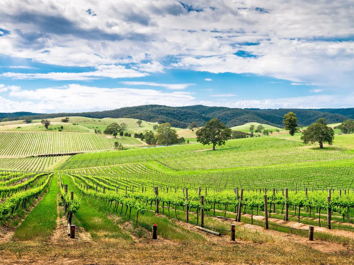Some of Australia's best wines grow around Adelaide