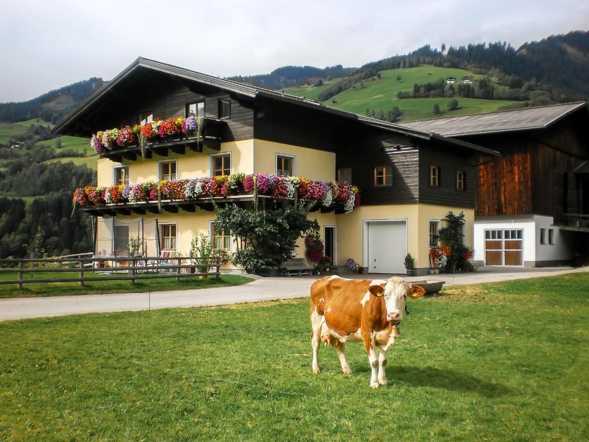 Rieserhof/Fam. Meißnitzer in Pongau, Austria