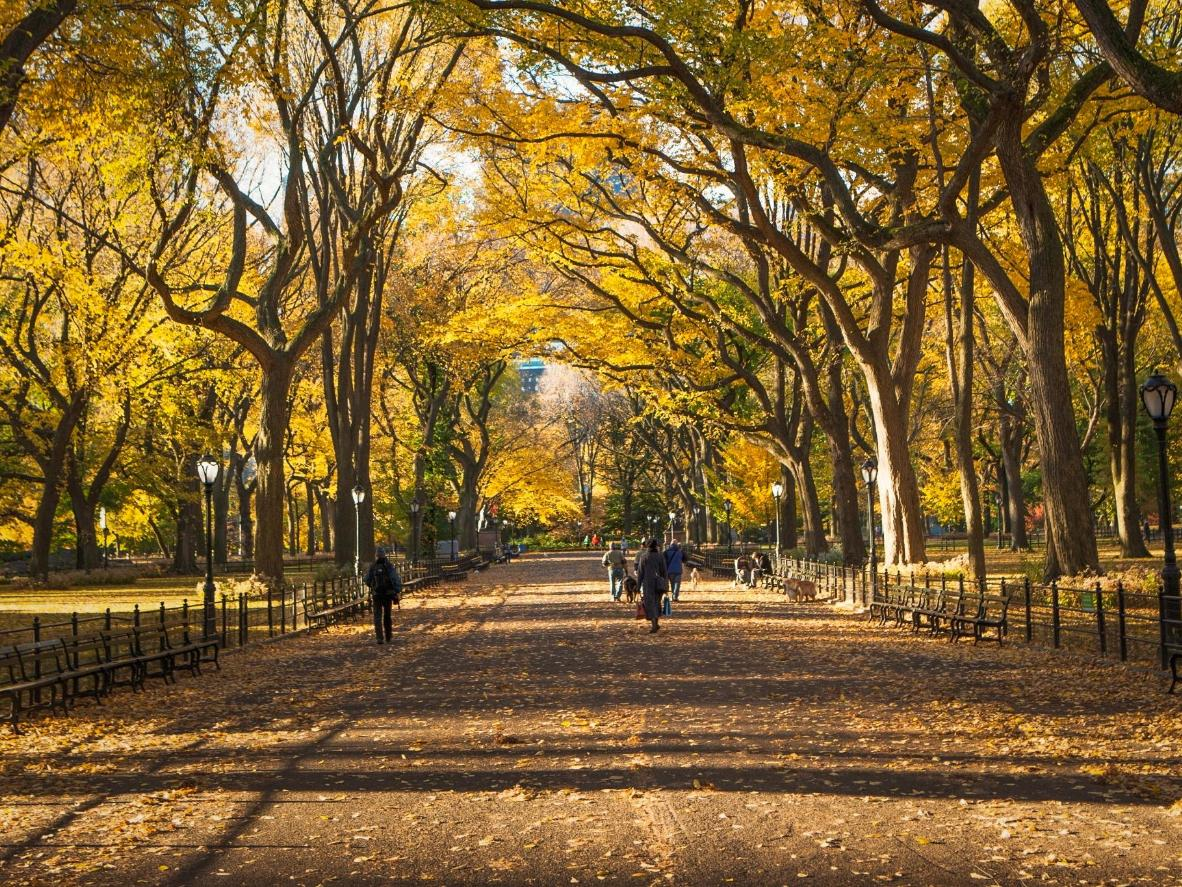 Spend hours exploring Manhattan's Central Park