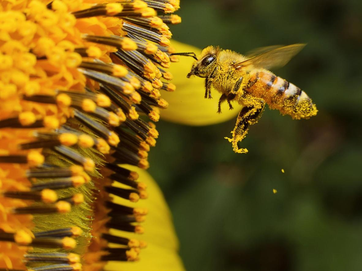 International bee fans can sponsor a hive at the Adelaide Bee Sanctuary