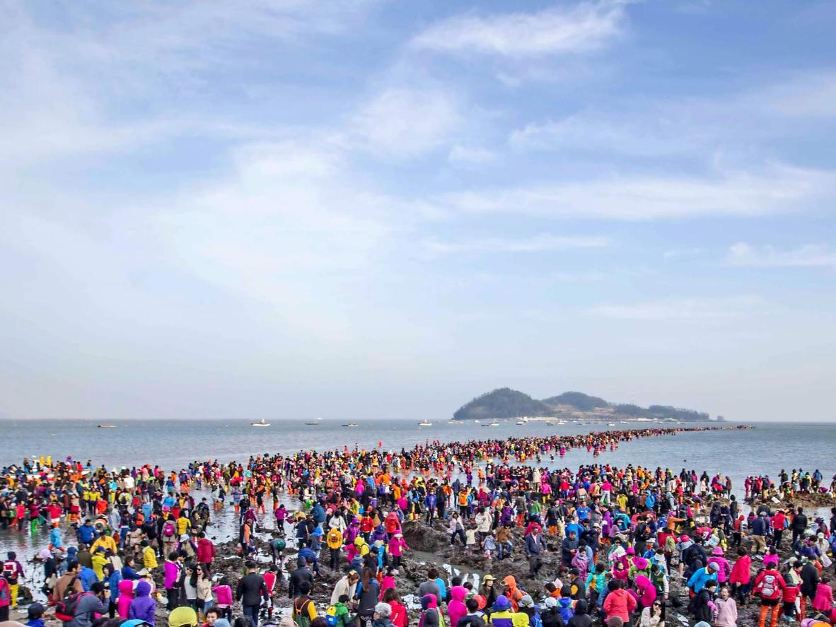 The Jindo Sea-Parting Festival in full swing